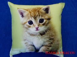 Fotopolštářek 5 - koťátko